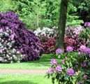 Rhododendron park in Bremen Hotels